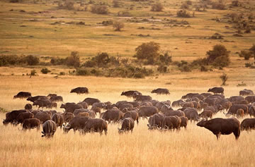 3-Day Masai Mara Crossing