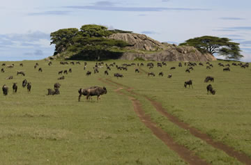 5-Day Majestic Northern Tanzania Safari