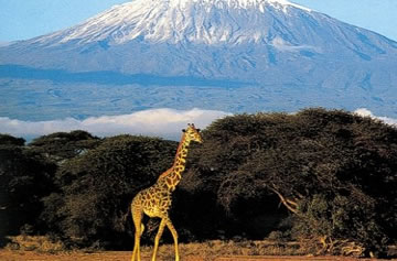 7-Day Kenya Exclusive Safari