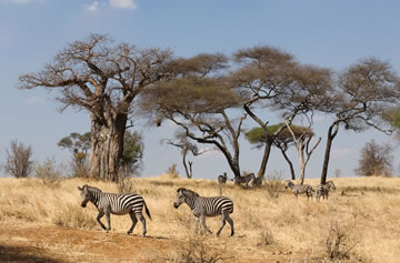 9-Day Migration Safari
